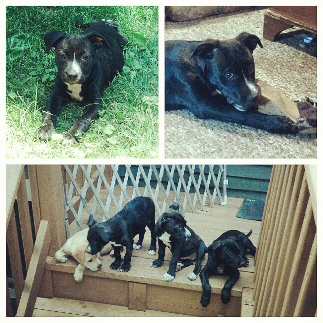 The Scooby Pups: my first fosters and my first keeper, later to be named Sophie.