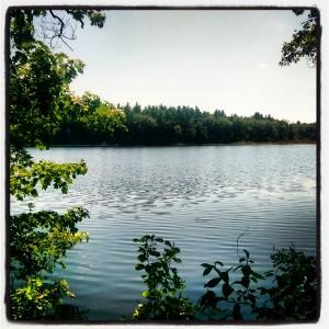 Proutty Woods, Littleton, MA