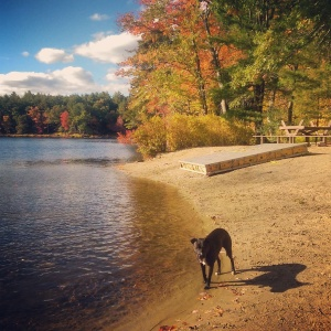 East Boston Camps/Stony Brook Conservation Area, Westford, MA