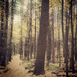 Estabrook Woods/Punkatasset Conservation Land, Concord, MA