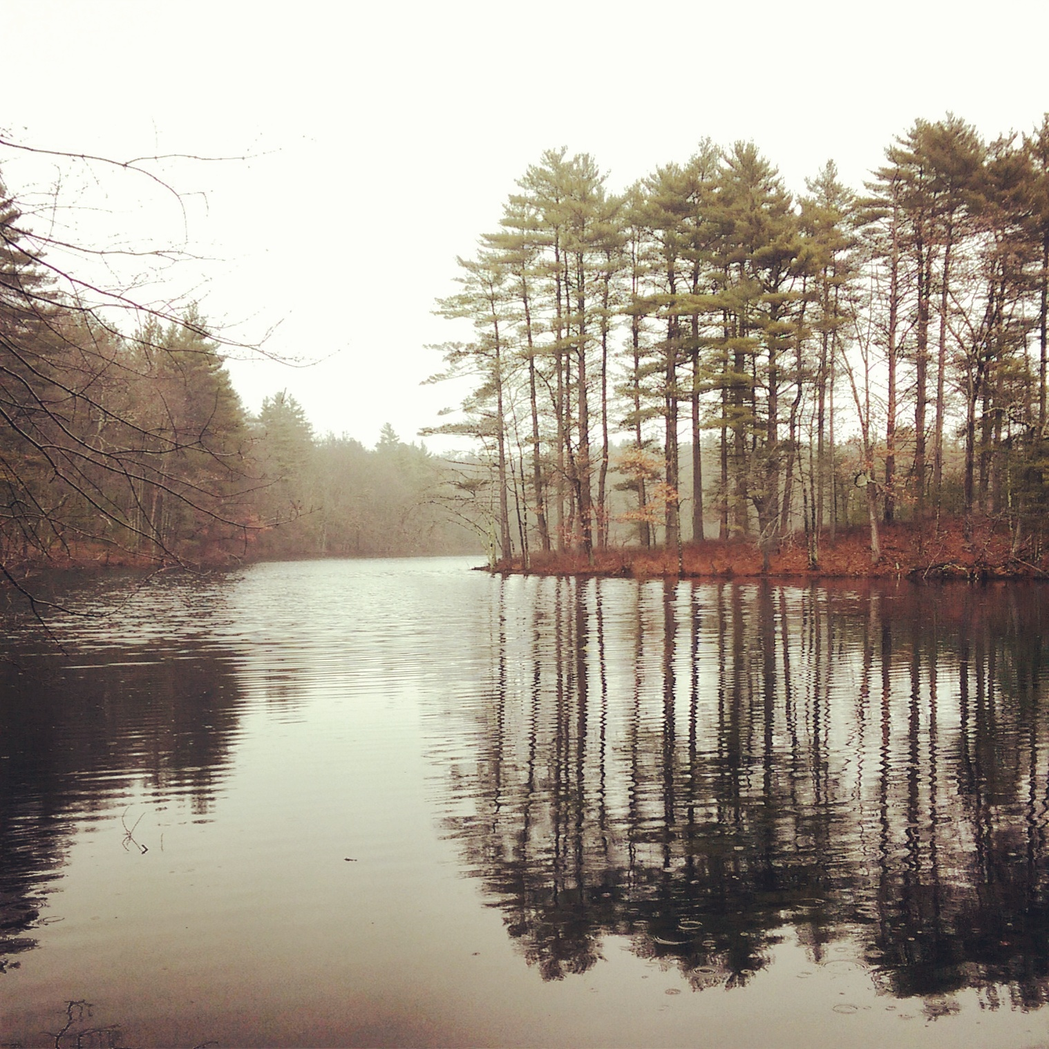 Harold Parker State Forest, North Andover, MA